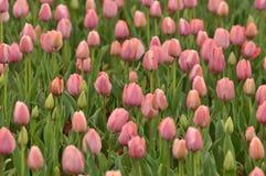 Cama de flor en jardín botánico foto de archivo