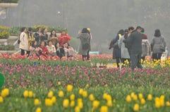 Cama de flor en jardín botánico imagenes de archivo