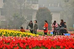 Cama de flor en jardín botánico foto de archivo libre de regalías