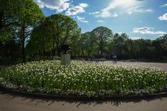 Cama de flor en parque fotografía de archivo
