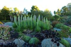 Cama de flor exótica das plantas Fotografia de Stock