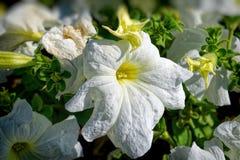 cama de flor de flores brilhantes foto de stock