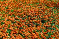 cama de flor de flores brilhantes foto de stock royalty free