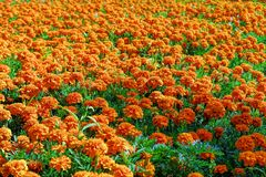 cama de flor de flores brilhantes imagens de stock