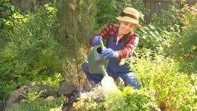 Cama de flor molhando do jardineiro vídeos de arquivo