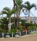 Cama de flor na praia Foto de Stock