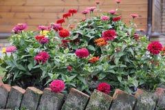 Cama de flor no jardim Imagens de Stock Royalty Free