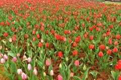 Cama de flor no jardim botânico Foto de Stock