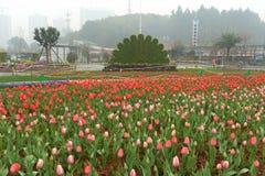 Cama de flor no jardim botânico Imagens de Stock Royalty Free