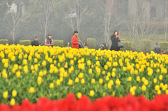 Cama de flor no jardim botânico Fotografia de Stock Royalty Free
