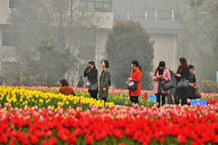 Cama de flor no jardim botânico Foto de Stock Royalty Free