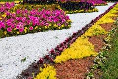 Cama de flor no parque do verão Imagem de Stock