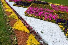 Cama de flor no parque do verão Imagens de Stock