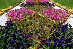 Cama de flor no parque do verão Fotos de Stock Royalty Free