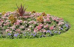 Cama de flor ornamental Foto de archivo
