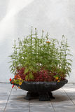 Cama de flor de pedra com flores Fotografia de Stock