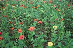 Cama de flor perenne del jardín en primavera Afuera, al aire libre imagenes de archivo
