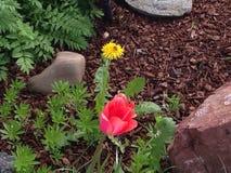 Cama de flor plantada de tulipanes, del diente de león y de la abeja Fotografía de archivo