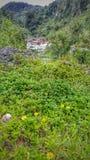 Cama de flor por el río Fotos de archivo