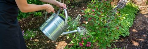 Cama de flor de riego de la mujer irreconocible usando la regadera Concepto de la afición que cultiva un huerto landscaping imagen de archivo libre de regalías