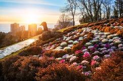 Cama de flor sob a forma de um pavão Foto de Stock Royalty Free