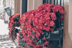 Cama de flor de suspensão com flores cor-de-rosa imagens de stock
