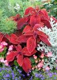 Cama de flores anual Fotos de archivo