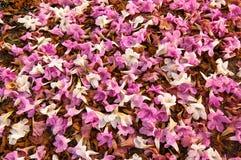 Cama de flores caidas Foto de archivo libre de regalías
