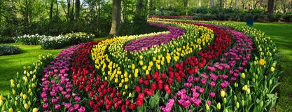 A cama de flores decorativa surpreendente no keukenhof jardina Países Baixos Imagens de Stock Royalty Free
