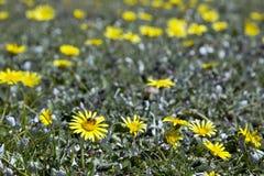 Cama de flores salvajes Fotos de archivo