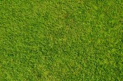 Cama de la hierba Imágenes de archivo libres de regalías
