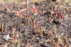 Cama de la primavera Foto de archivo libre de regalías