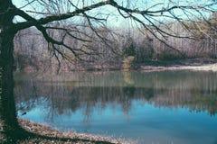 Cama de lago Imagem de Stock