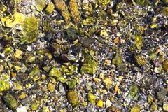 Cama de lago das rochas ou dos seixos sob a água foto de stock