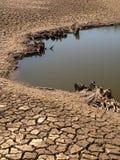 Cama de lago secado imagens de stock
