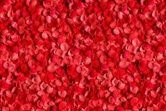 Cama de los pétalos de rosas rojas Foto de archivo libre de regalías