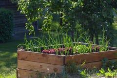 Cama de madera aumentada con las plantas vegetales en un jardín rural del país, espacio de la copia imagen de archivo libre de regalías
