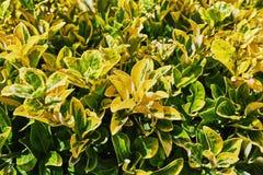 Cama de plantas amarillas y verdes Imágenes de archivo libres de regalías