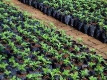 cama de plantas de semillero de la granja del cuarto de niños Imagen de archivo