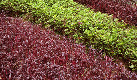 Cama de plantas do jardim Imagem de Stock Royalty Free