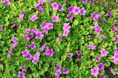 Cama de primaveras. Fotografía de archivo libre de regalías