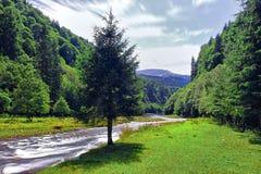 Cama de río Fotografía de archivo