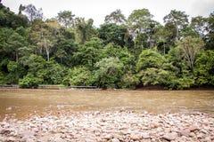 Cama de río pedregosa en una selva verde enorme imágenes de archivo libres de regalías