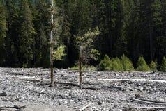 Cama de río rocosa Foto de archivo libre de regalías