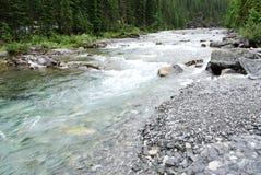 Cama de río rocosa de las ovejas imagenes de archivo