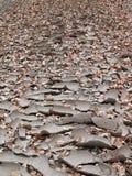 Cama de río seca fotos de archivo