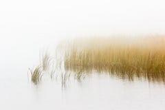 Cama de Reed en fogg Fotografía de archivo libre de regalías