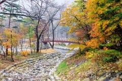 Cama de rio de pedra no parque nacional de Seoraksan durante a estação do outono foto de stock royalty free