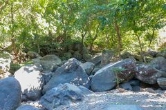 Cama de rio seca com pedregulhos enormes Vegetação luxúria, bambu e selva tropical imagens de stock royalty free