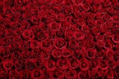 Cama de rosas Foto de archivo libre de regalías